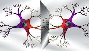 Las Neuronas Espejo y el aprendizaje