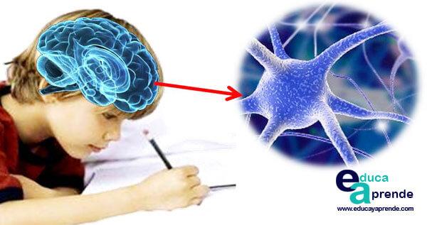 Sistema Neuroescritural