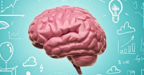 El cerebro multilingüe , Como aprende el cerebro